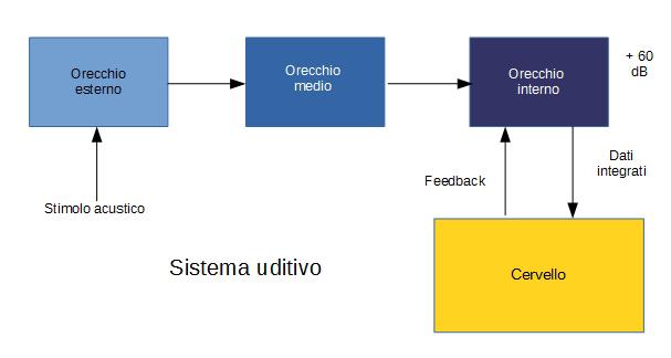 Apparato uditivo - Sistema uditivo